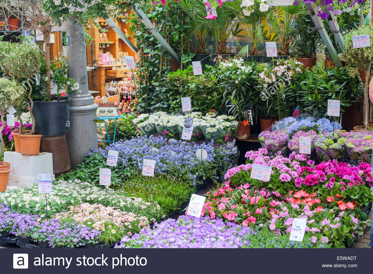 Flower and plants for sale in the Bloemenmarkt floating flower market, Amsterdam, North Holland, Netherlands - Stock Image