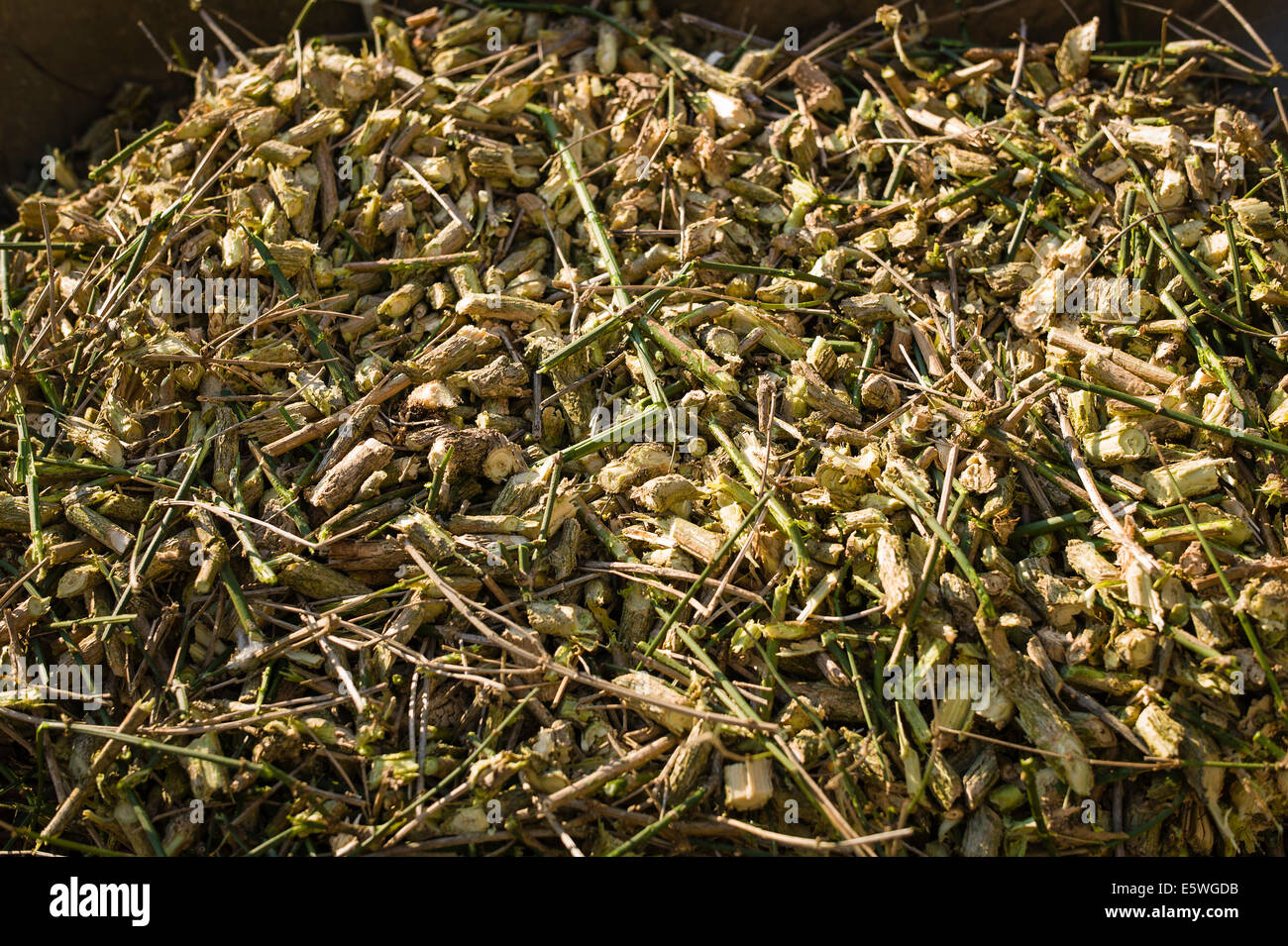 Shreddings of woody material ready for use on garden - Stock Image