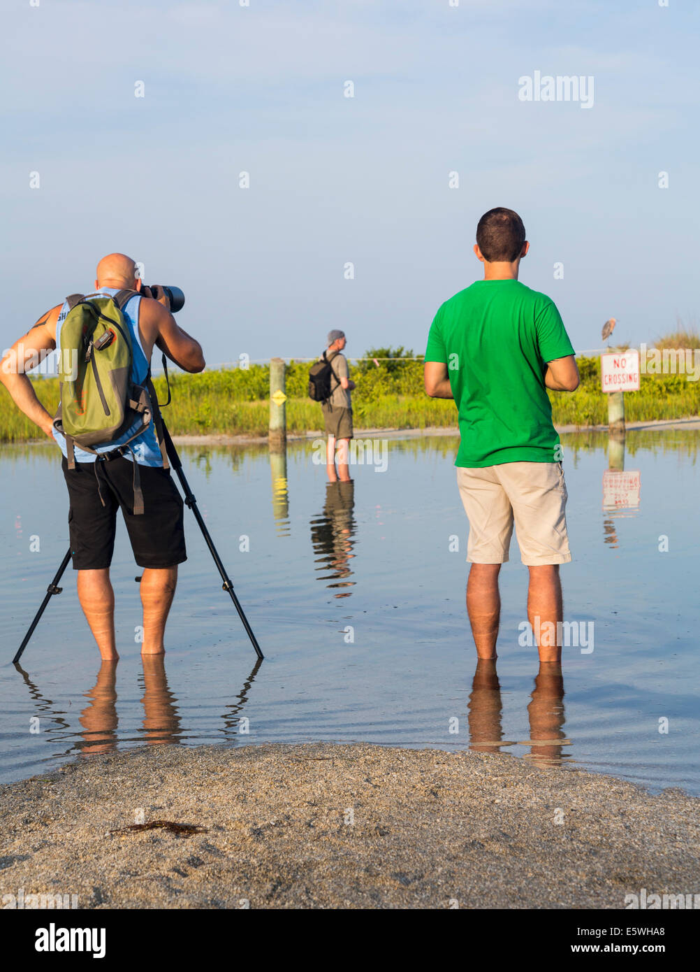 Bird watchers taking photos of sea bird protection sign on Fort de Soto county park beach in Florida, USA - Stock Image