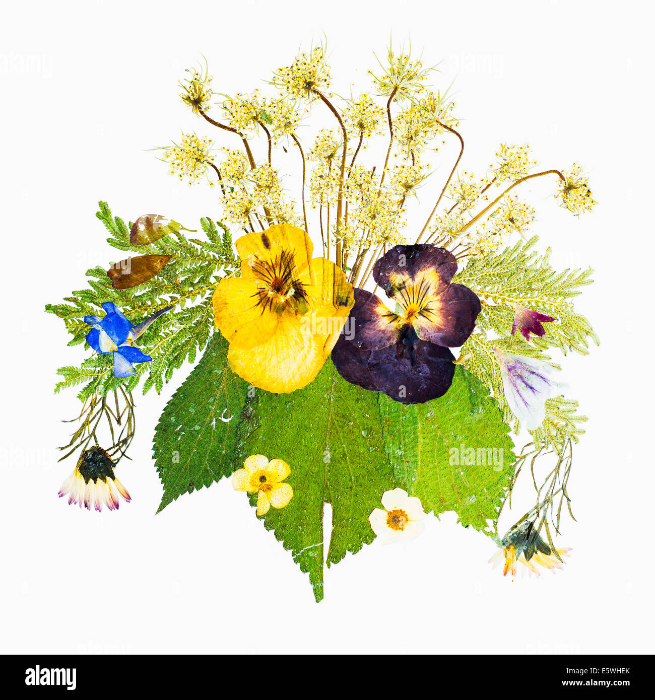 Dried pressed flowers - Stock Image