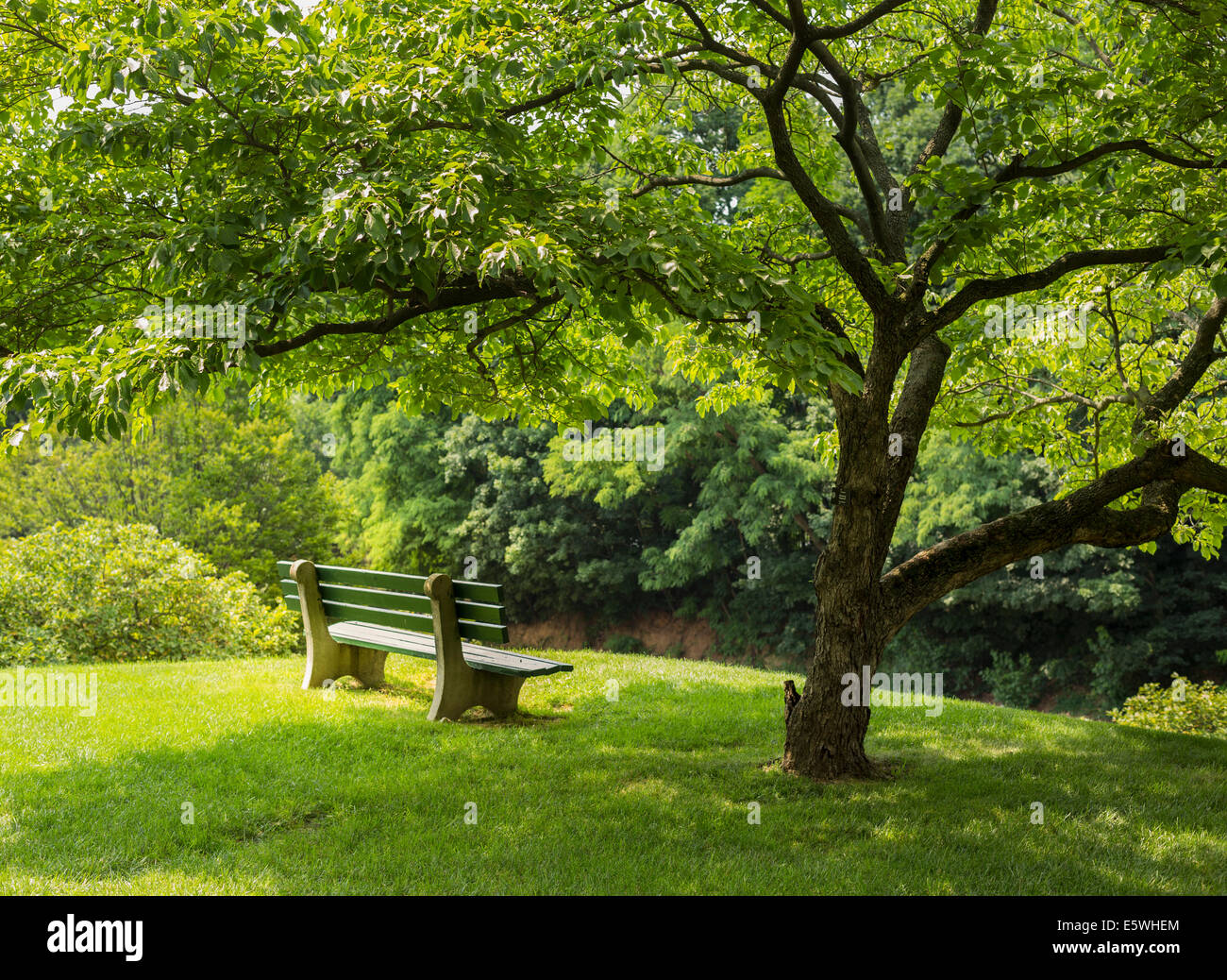 Park bench in the shade of a flowering dogwood tree in an urban park - Stock Image