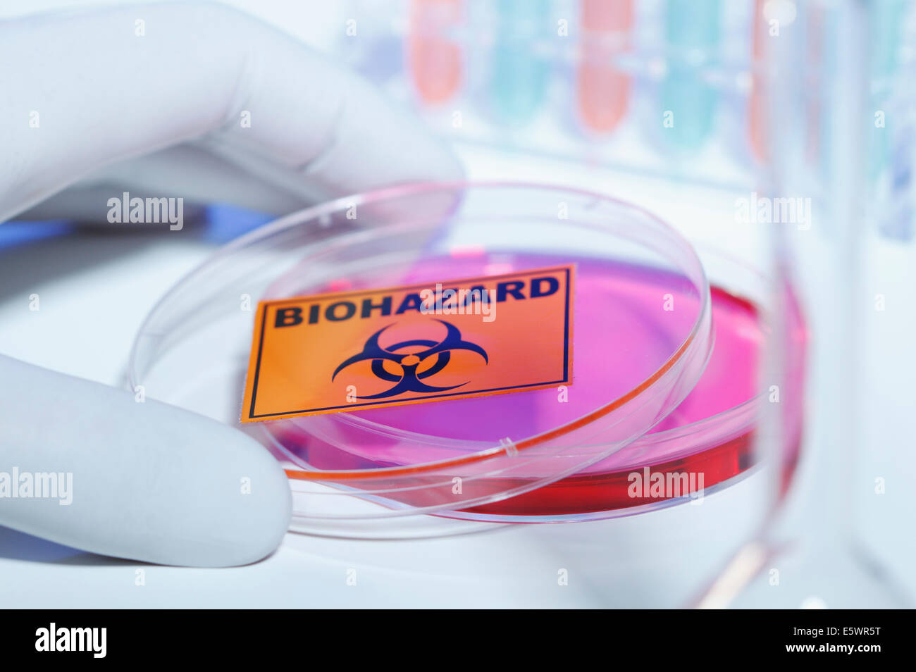 Gloved hand removing bio hazard lid from petri dish - Stock Image