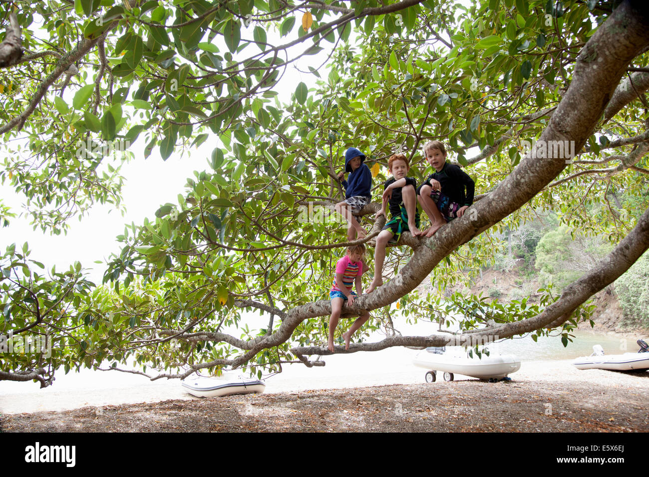Portrait of girl and three brothers sitting in tree at beach - Stock Image