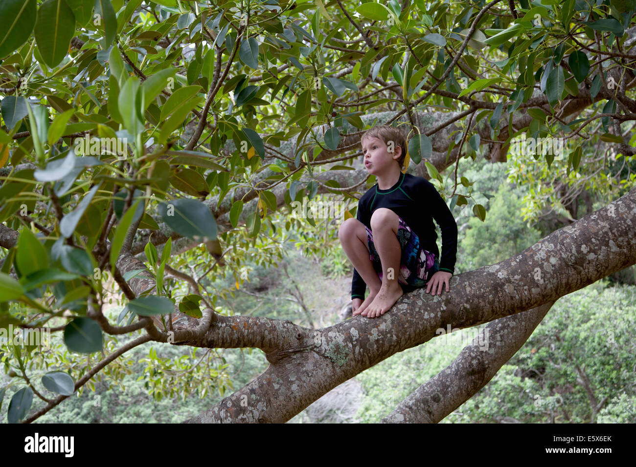 Boy sitting in tree and gazing - Stock Image