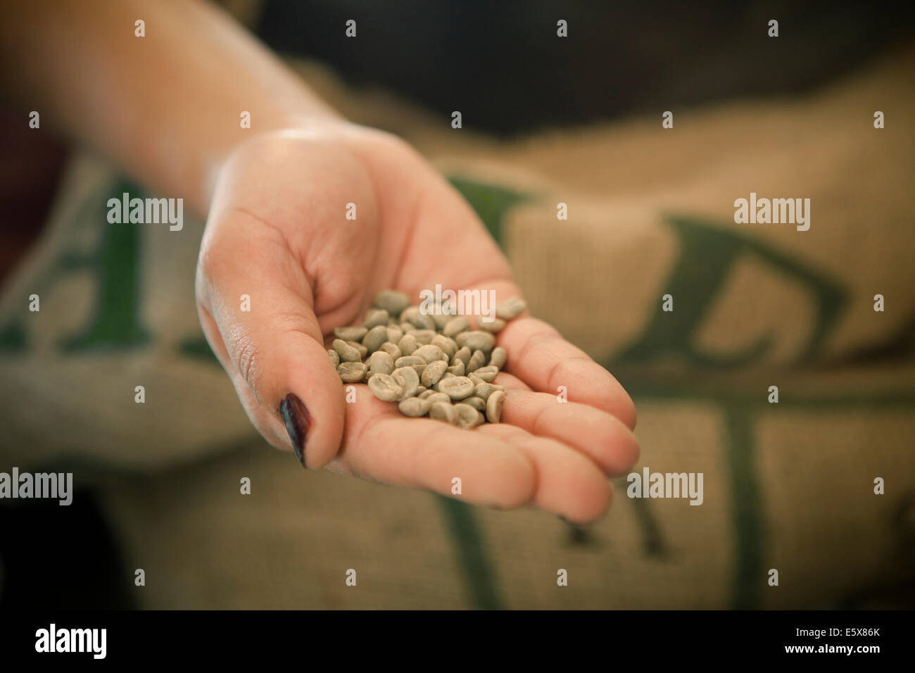 Close up of woman's hand holding raw coffee beans in cafe Stock Photo