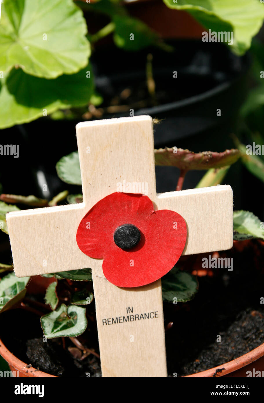 Remembrance Day Poppy Worcester Worcestershire England UK - Stock Image