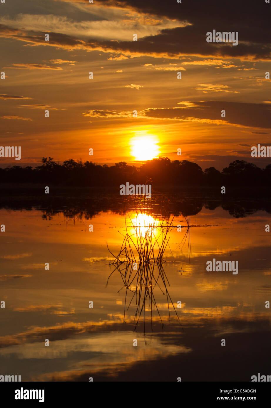 Okavango delta sunset - Stock Image
