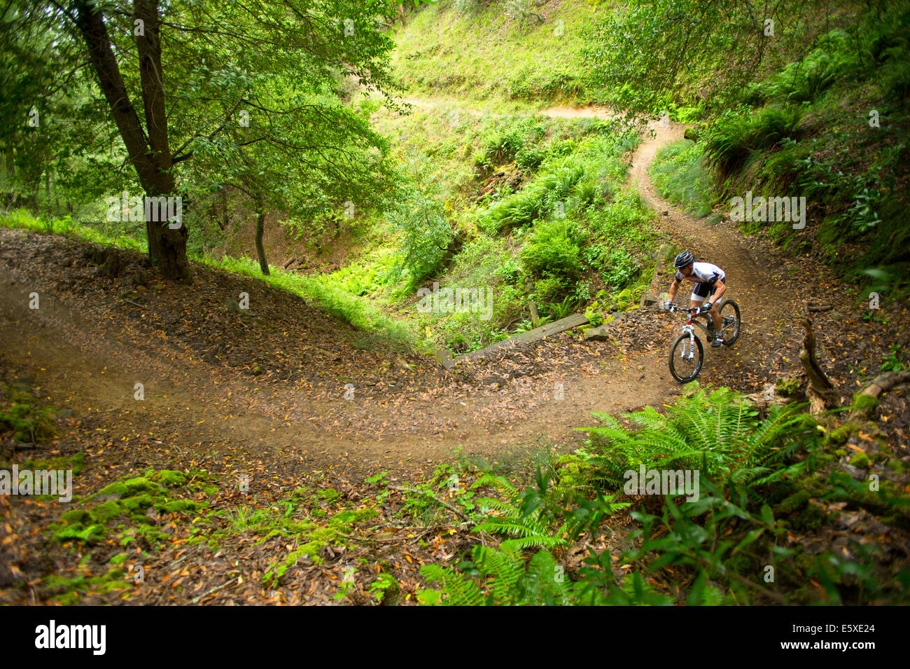 Mike mountain biking in China Camp State Park, California. - Stock Image