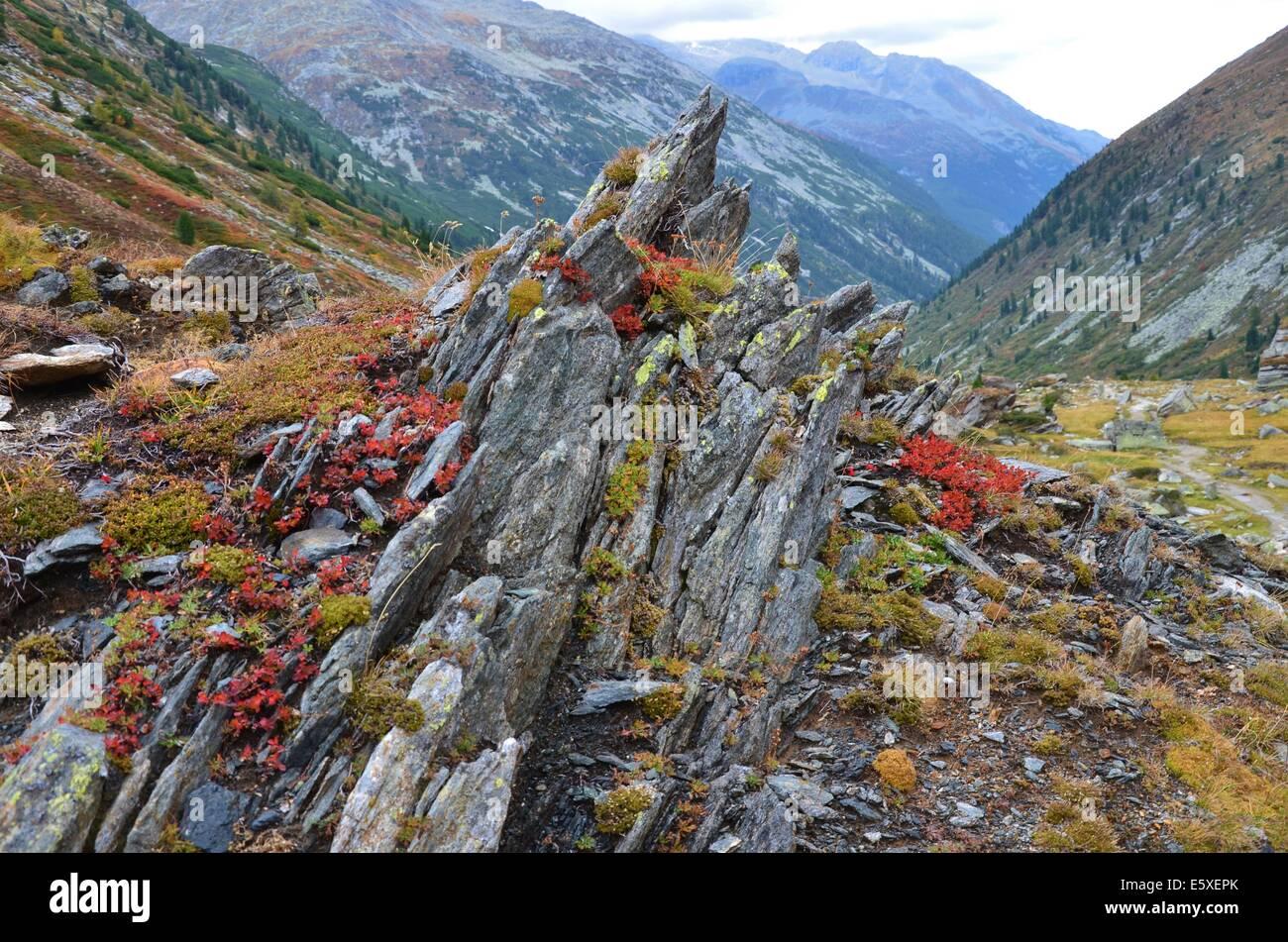autumn in the Zillertal Alps High Alpine Nature Park of the Zillertal Alps, Tirol, Austria. Zillertal Main Ridge Stock Photo