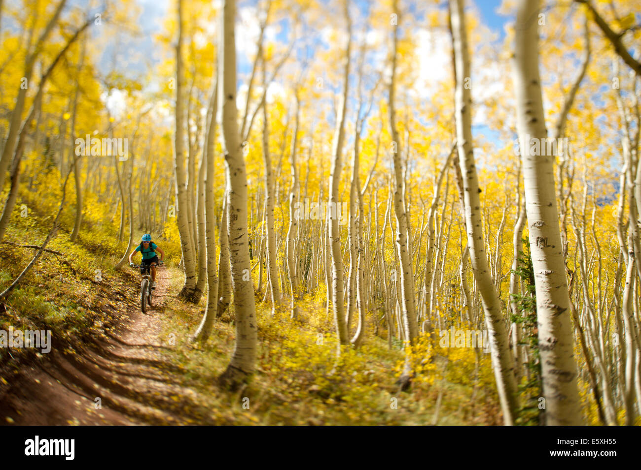 Jessie Anderson rides her mountain bike on the Wasatch Crest Trail in Big Cottonwood Canyon, Utah - Stock Image