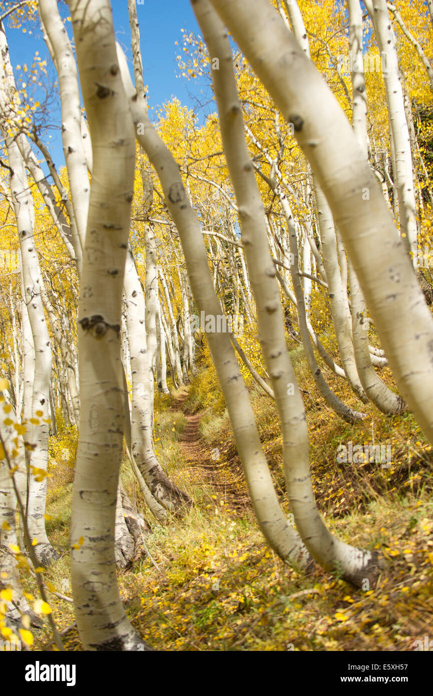 A shot through the trees while walking the Wasatch Crest Trail in Big Cottonwood Canyon, Utah - Stock Image
