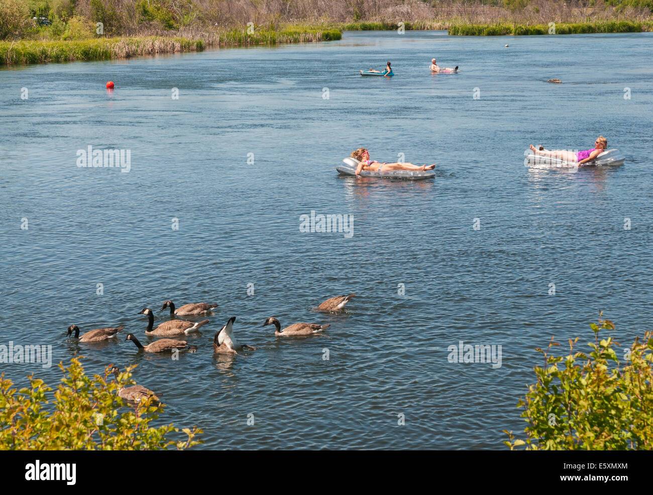 Oregon, Bend, Old Mill District, Deschutes River, geese, people floating on rafts - Stock Image