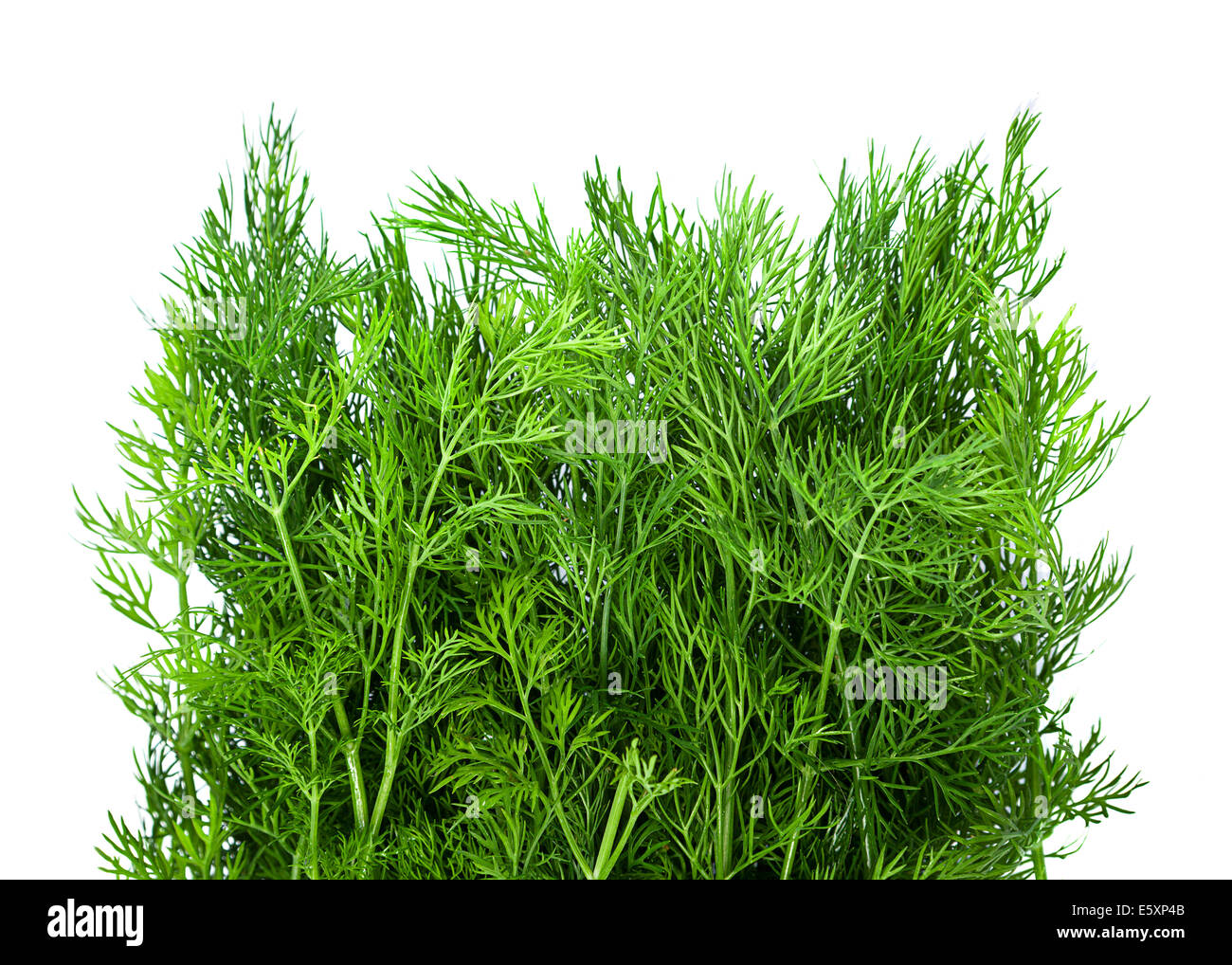 Dill herb closeup isolated on white background - Stock Image