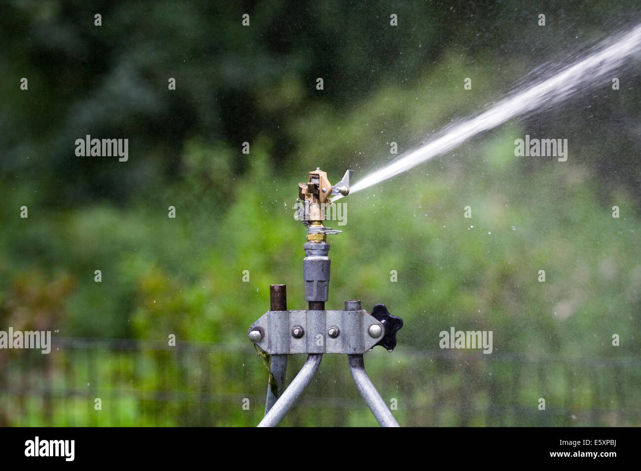 Rain Bird Adjustable Brass Impact Rotor Sprinklerhead sending a stream of  water to the right side - Stock Image