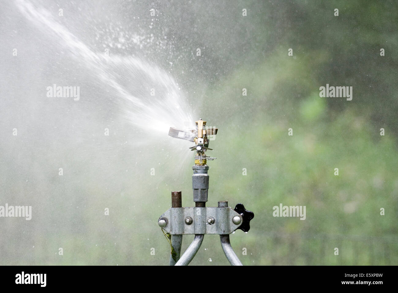 Rain Bird Adjustable Brass Impact Rotor Blade hitting a water stream on the left side of the sprinkler head - Stock Image