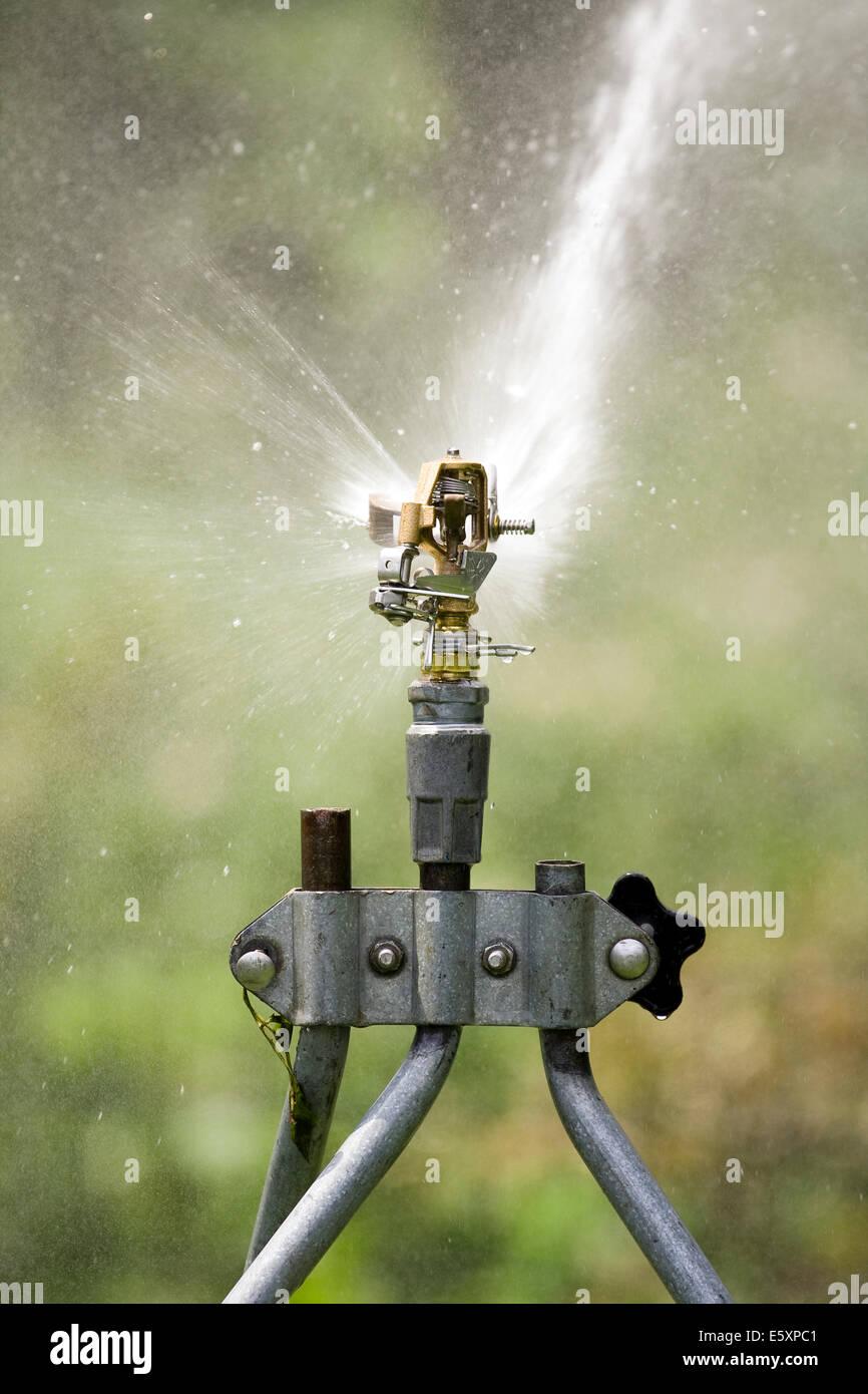 Rain Bird Adjustable Brass Impact Rotor Sprinklerhead sending a stream of water forward - Stock Image