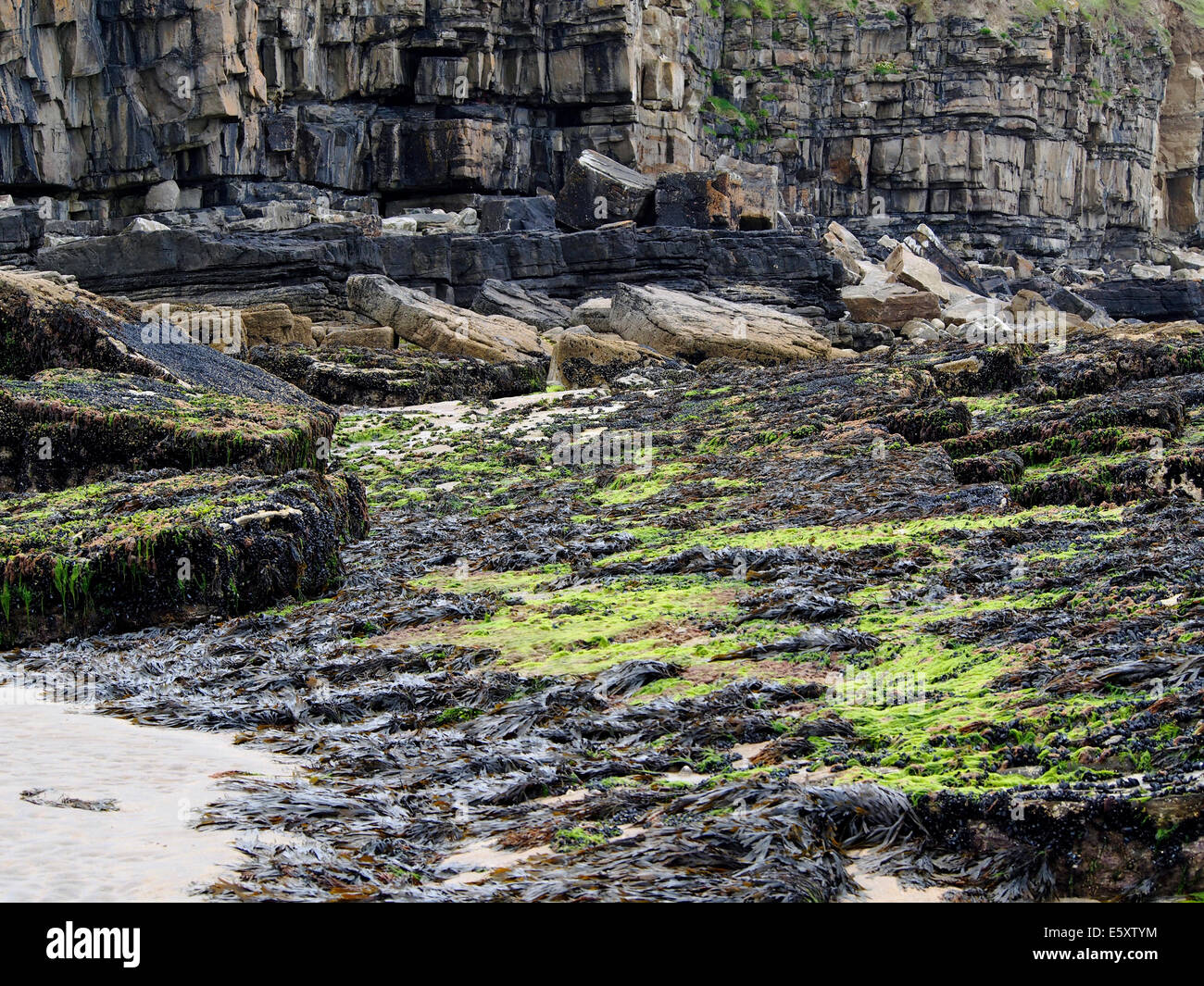Cliff with horizontally bedded strata and a wave cut platform at the base near Mullaghmore, County Sligo, Ireland - Stock Image