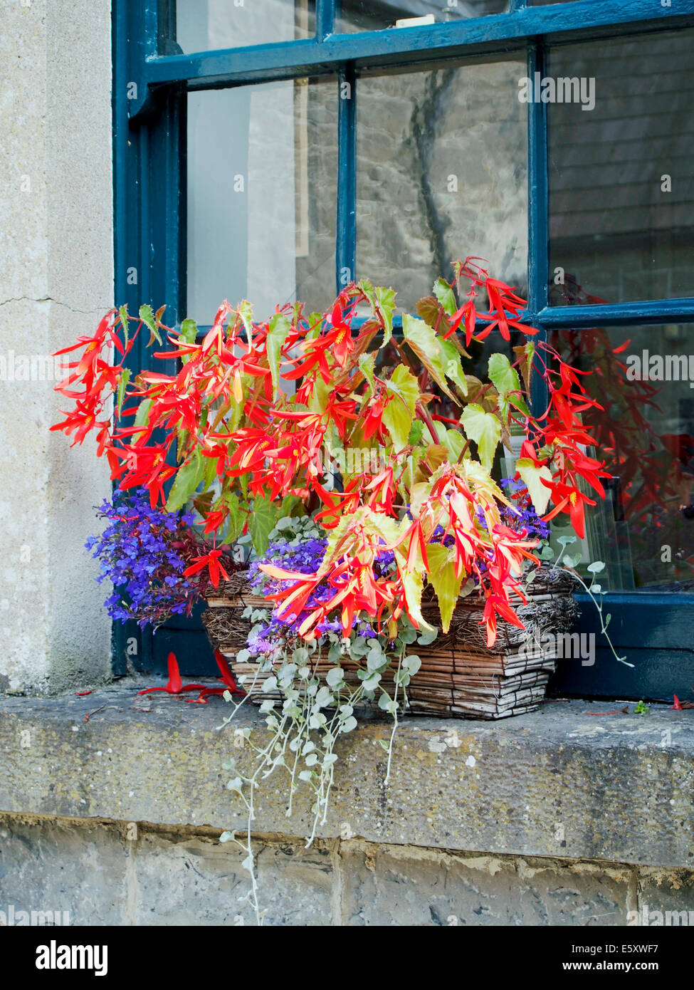 Brightly coloured flowers in a wicker window box on a stone cill with a blue painted sash window behind - Stock Image