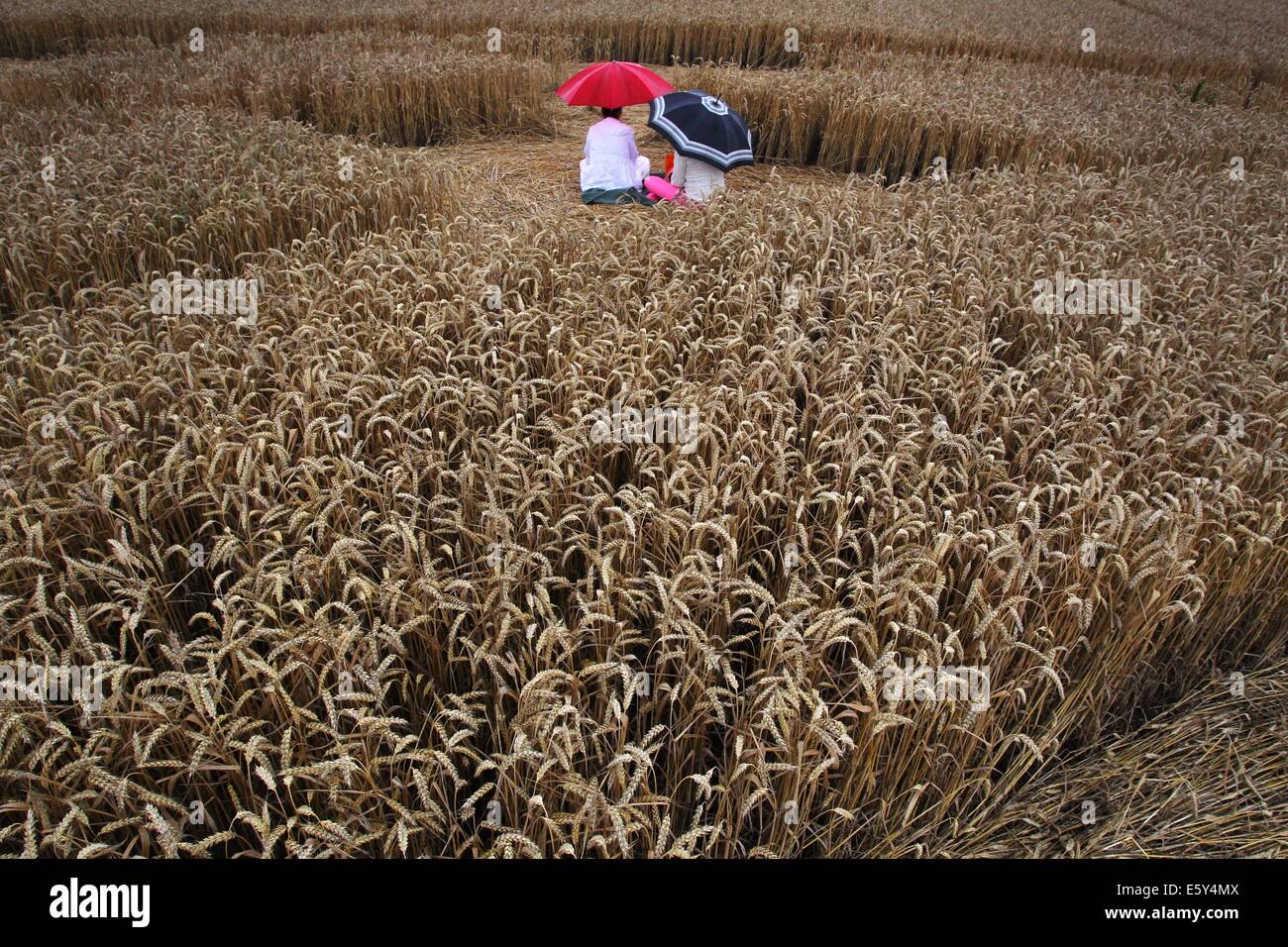 Excursionists sit underneath an umbrella in a cornfield near Raisting, Germany, 26 July 2014. A balloonist had recently - Stock Image