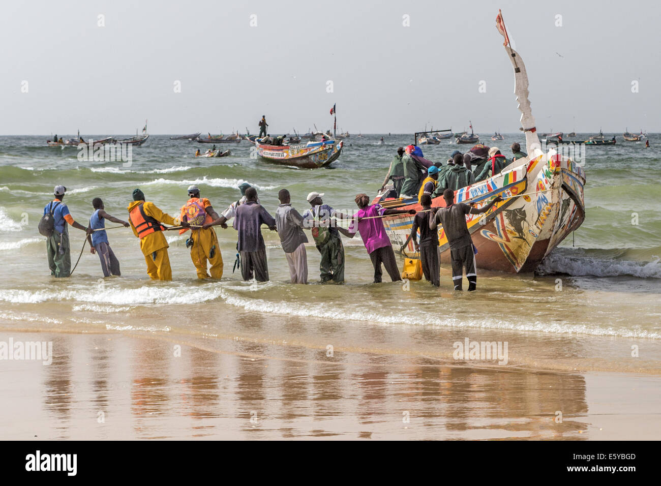 Hauling a Pirogue (fishing boat) onto the beech Kayar Senegal - Stock Image