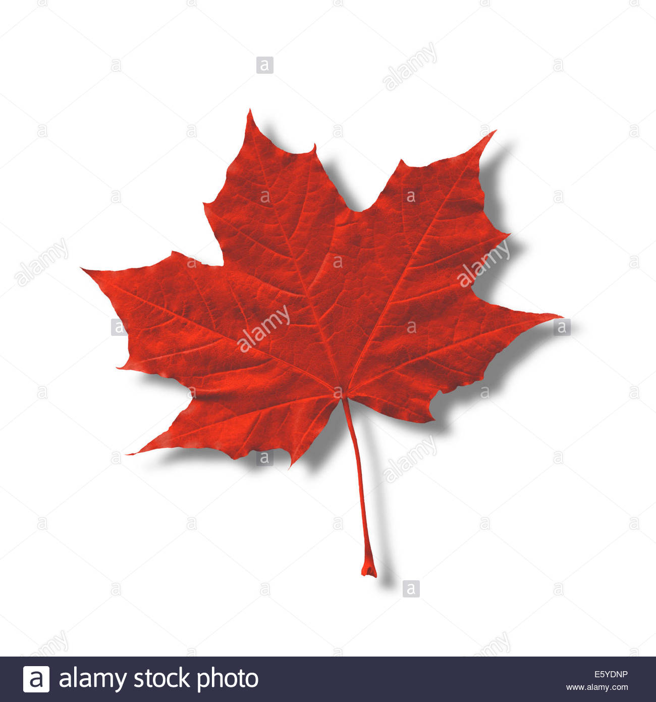 Canadian Pride Cut Out Stock Images Pictures Alamy