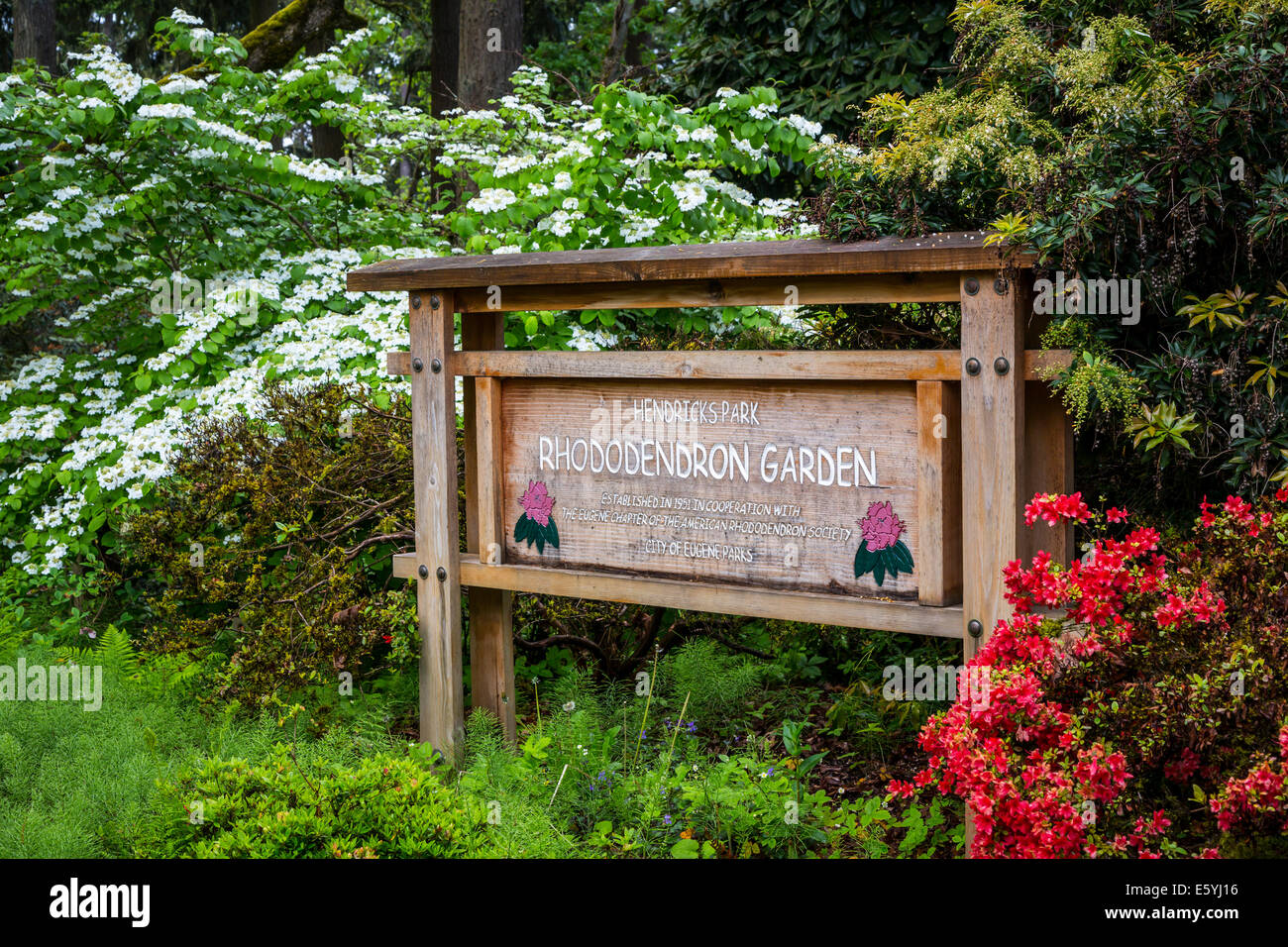 Hendricks Park and Gardens in Eugene, Oregon, USA. - Stock Image