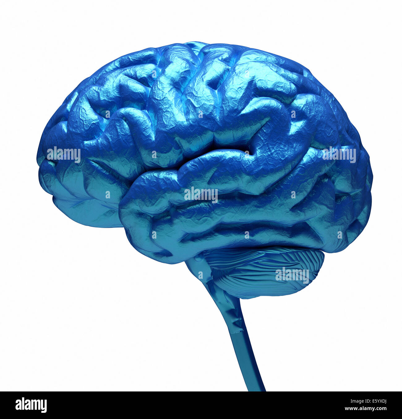 Conceptual image of a blue brain over white - 3d render - Stock Image