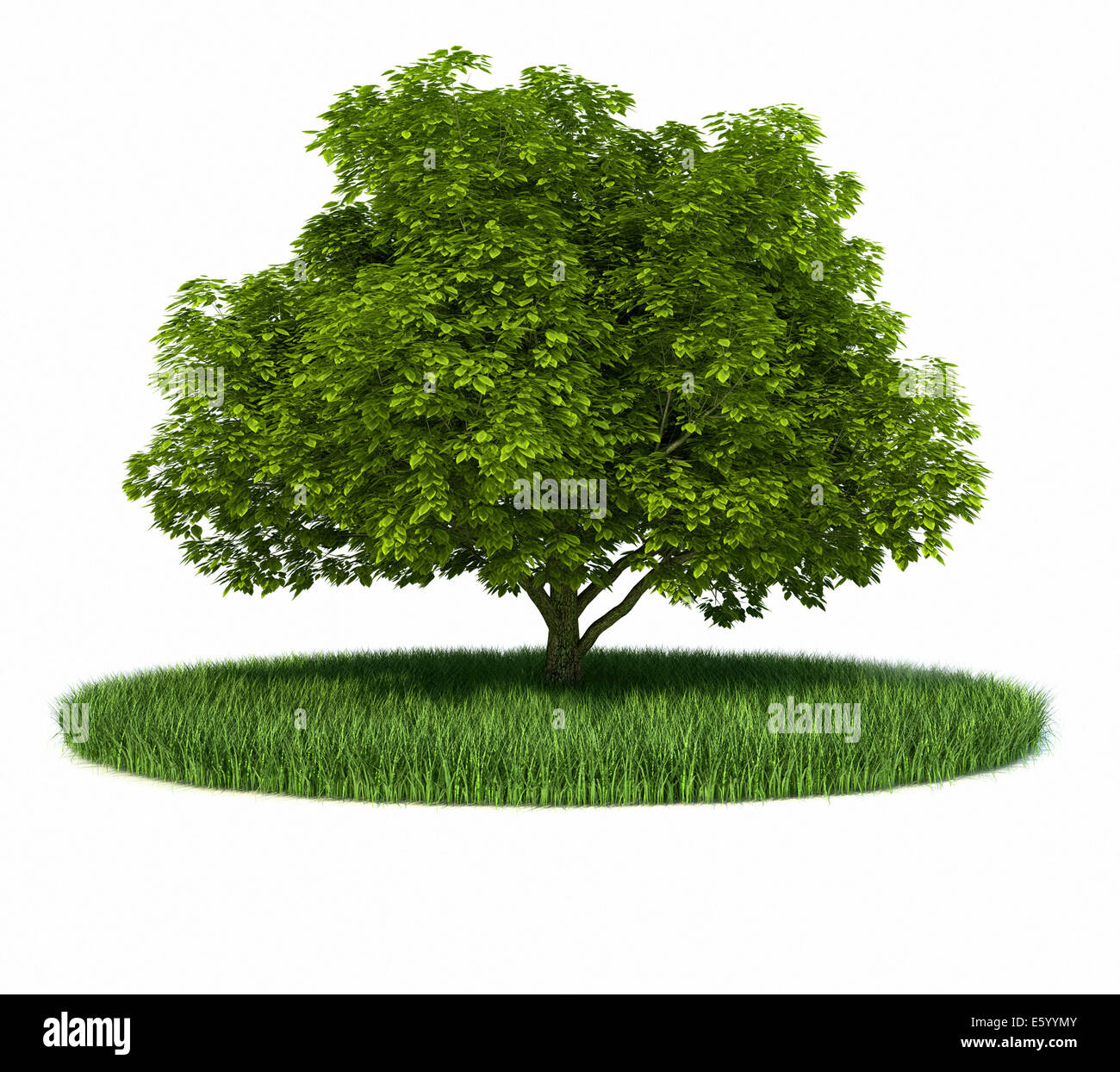 Grass green tree ring - this is a 3d render illustration - Stock Image
