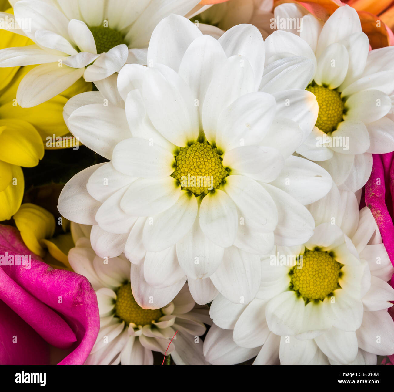 Background from different flowers closeup - Stock Image