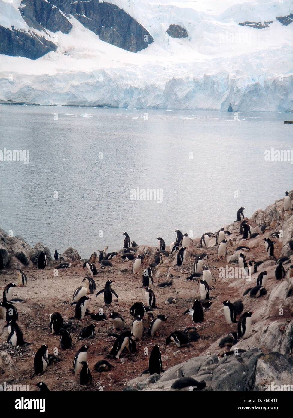 Brown Station, Argentine Antarctic base and scientific research station and home to Gentou penguins on the Antarctic Stock Photo