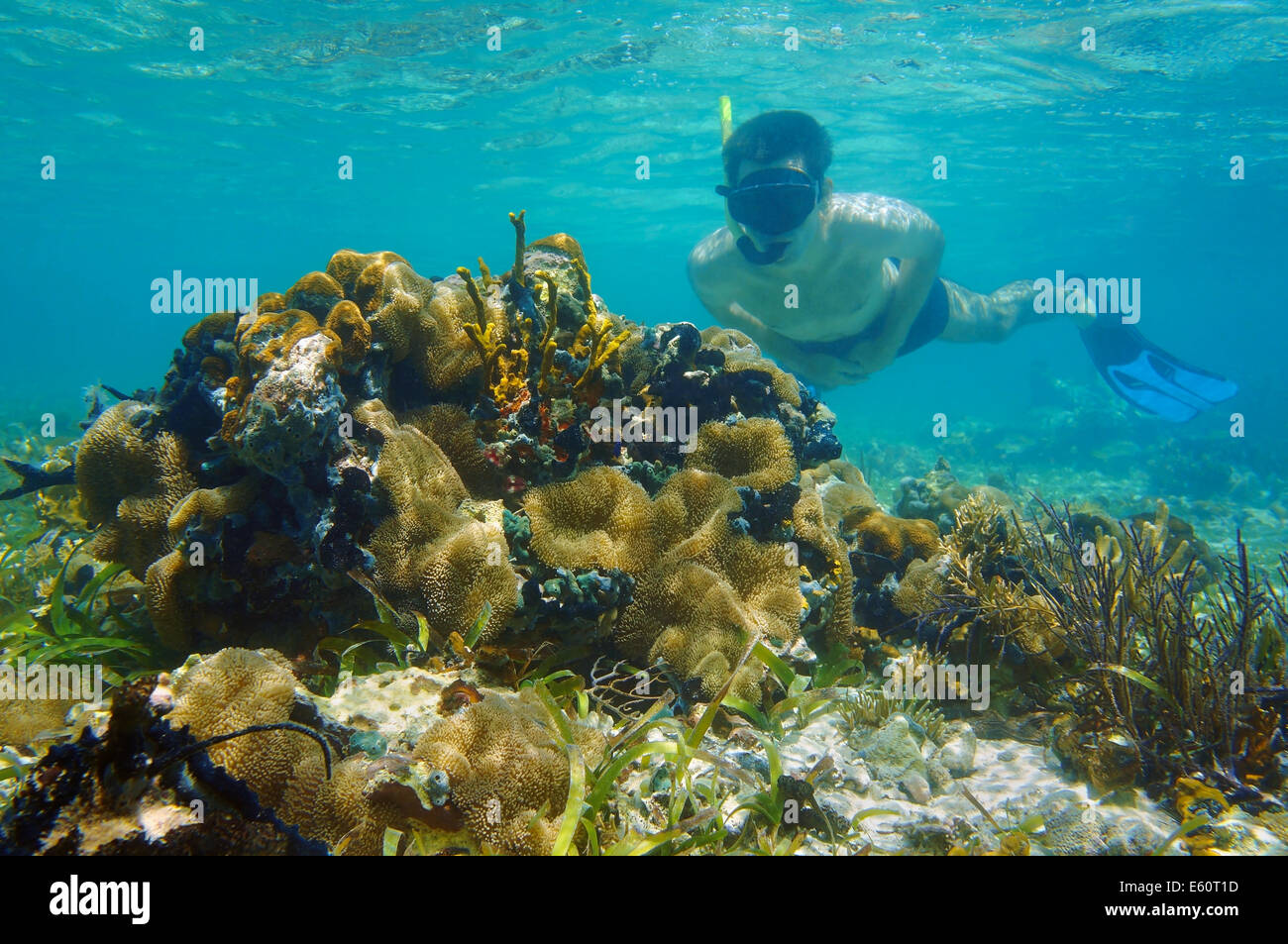 man underwater snorkeling in shallow water and looks tropical sea life - Stock Image