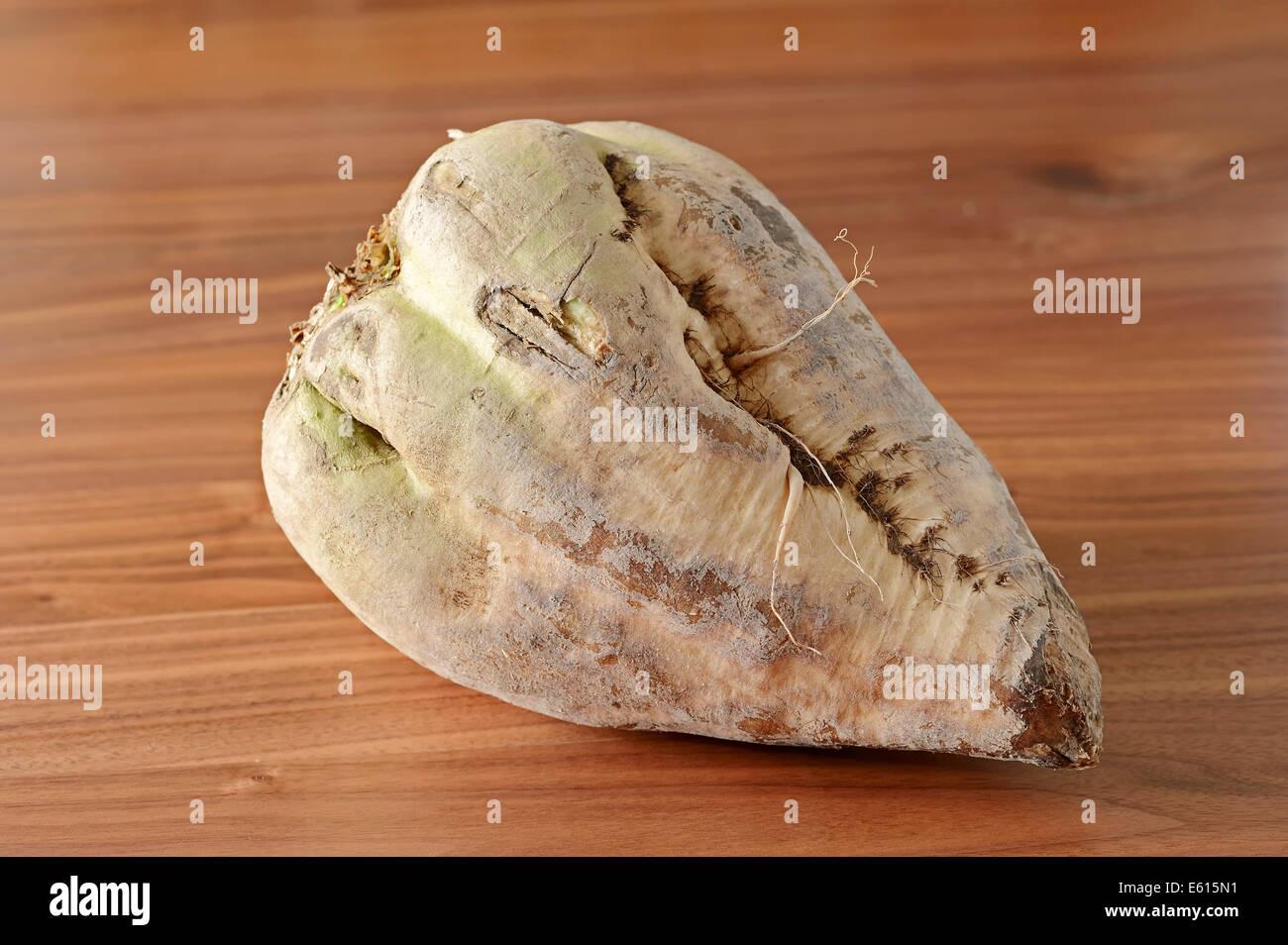 Sugar Beet (Beta vulgaris ssp. vulgaris var. altissima) - Stock Image
