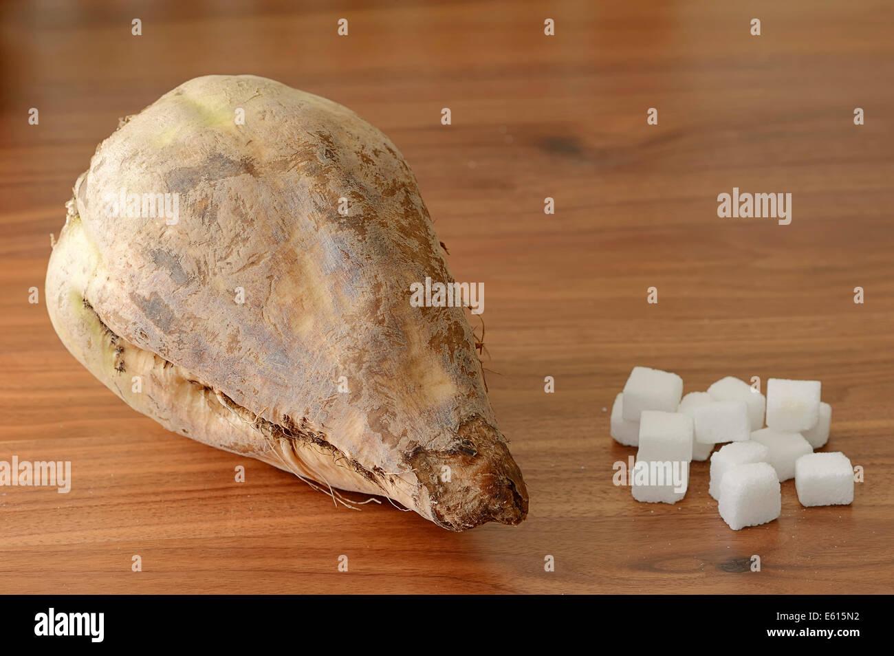Sugar Beet (Beta vulgaris ssp. vulgaris var. altissima) and sugar cubes, white sugar, refined sugar - Stock Image