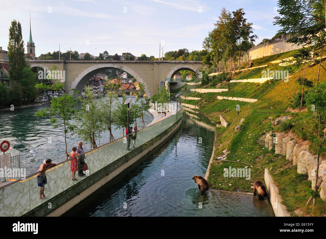 Bears in the new outdoor enclosure on the river Aare, Bärengraben trench and Nydeggbrücke bridge, Bern, - Stock Image