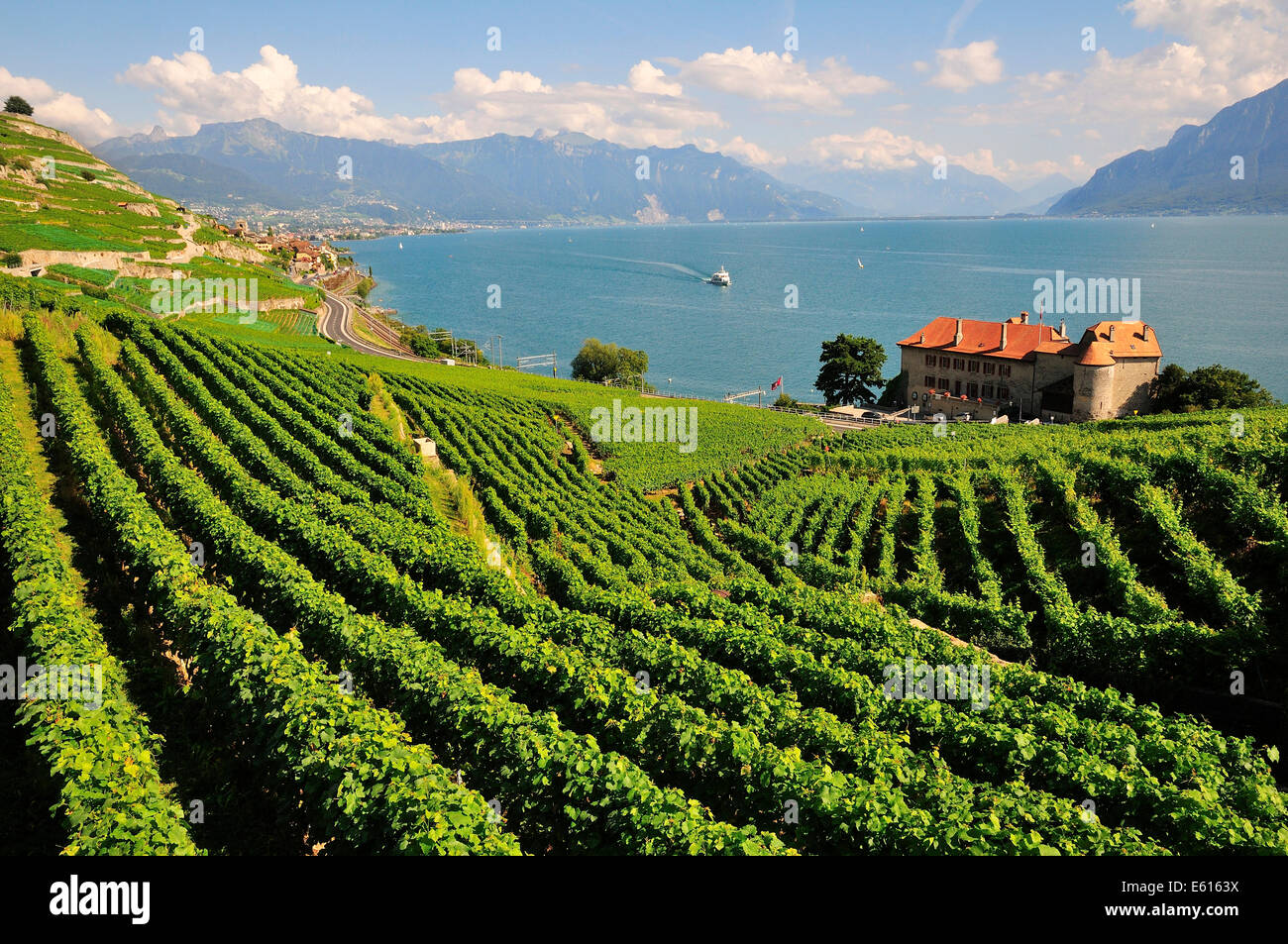 Views over the vineyards with Château de Glérolles and Lake Geneva towards the Swiss Rhone Valley, Saint - Stock Image