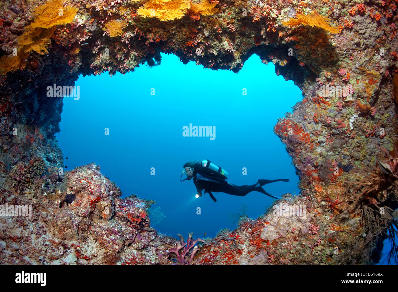 Scuba diver diving in front of a cave entrance, Lhaviyani Atoll, Indian Ocean, Maldives - Stock Image