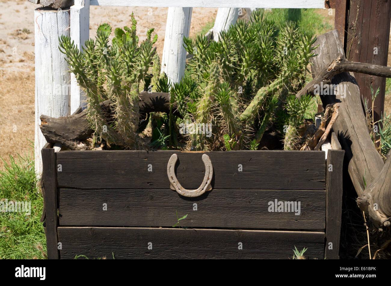 Lucky horseshoe and cacti, Salt Lake Stables, Tingaki, Kos Island, Dodecanese Islands, Greece. - Stock Image