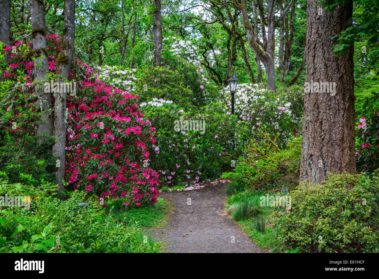 Hendrick's Park Rhododendron Gardens in Eugene, Oregon, USA. Stock Photo