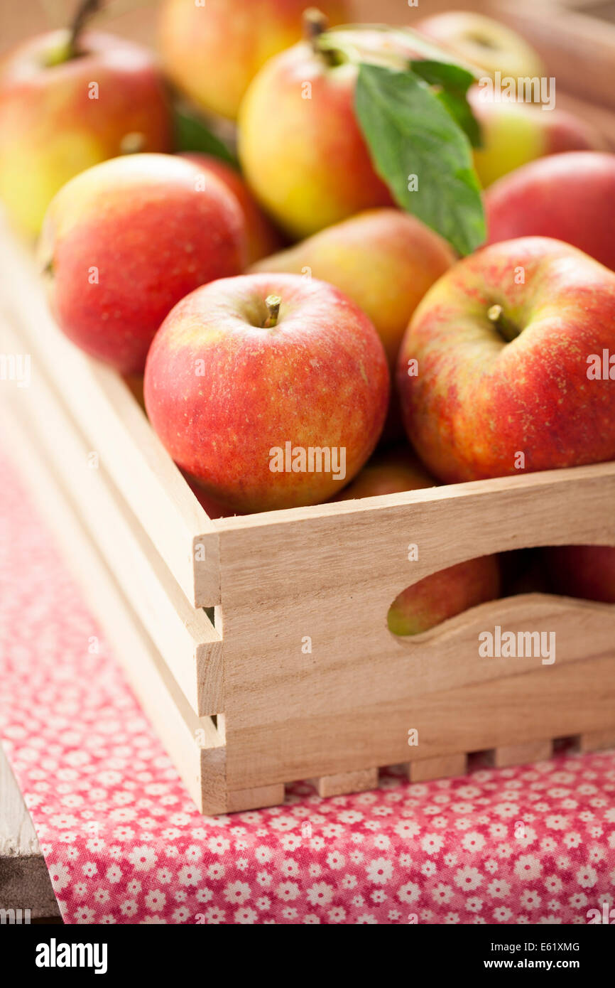 Red Apples in Wooden Box - Stock Image