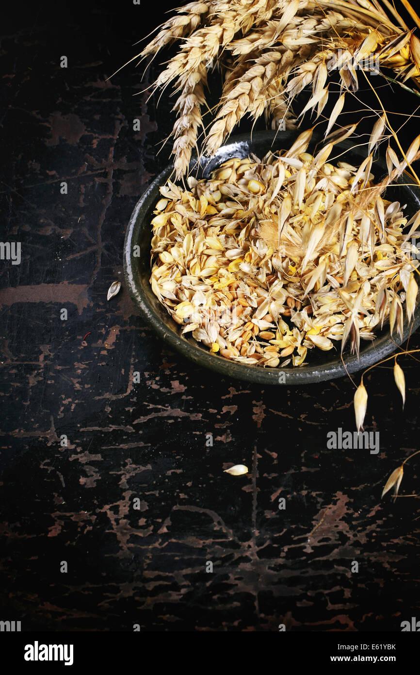 Ripe wheat and oat ears and ceramic plate of seeds over black wooden background - Stock Image