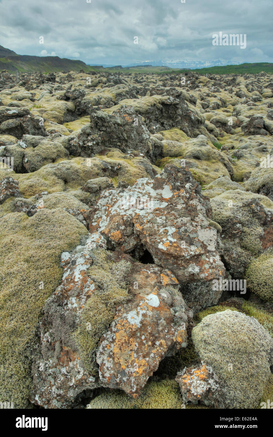 Lava Field covered with Moss Iceland LA007334 - Stock Image