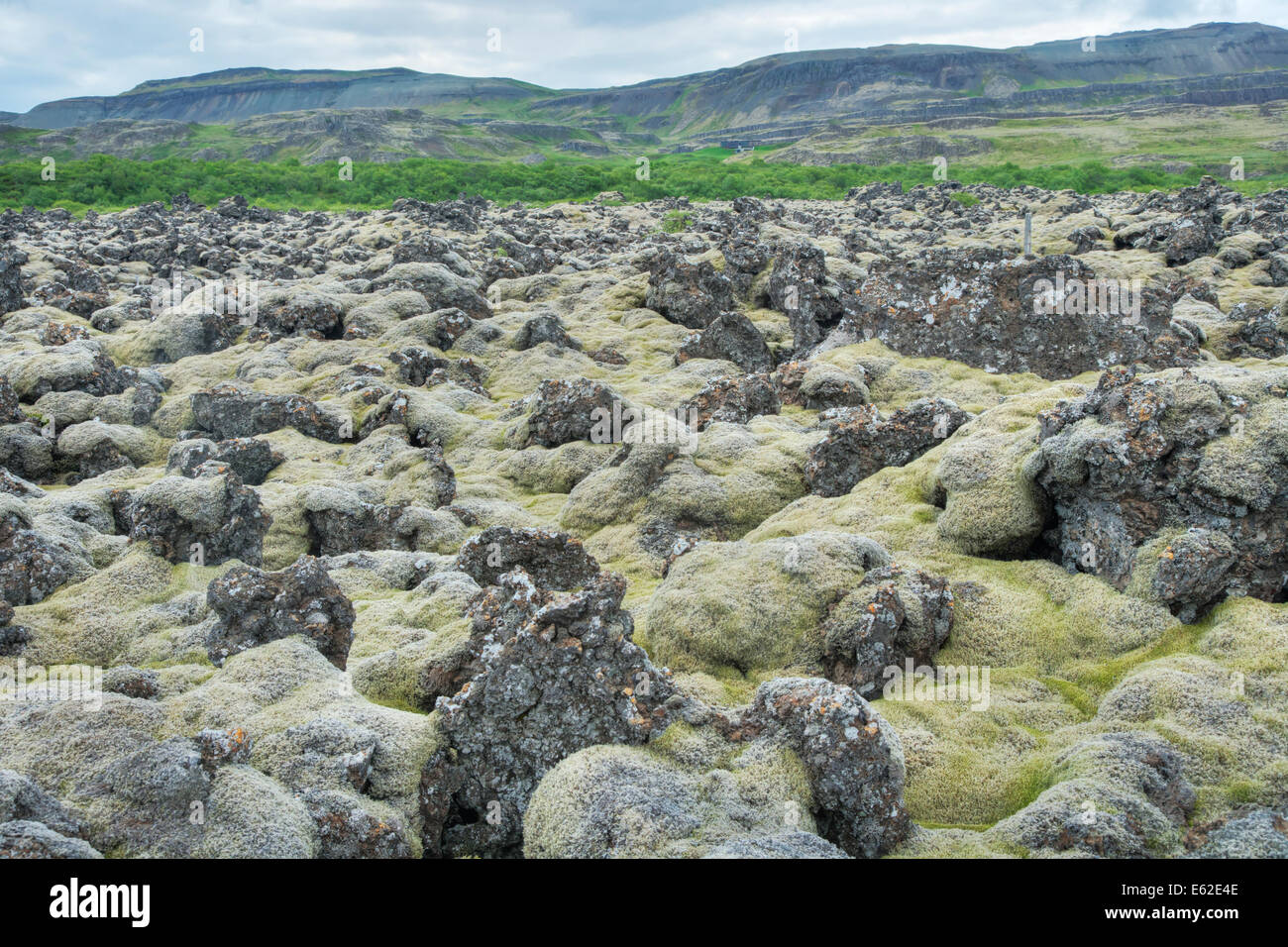 Lava Field covered with Moss Iceland LA007338 - Stock Image