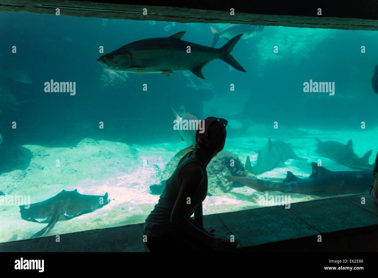 girl looking at fish in aquarium tank, Atlantis Paradise Island resort, The Bahamas - Stock Image