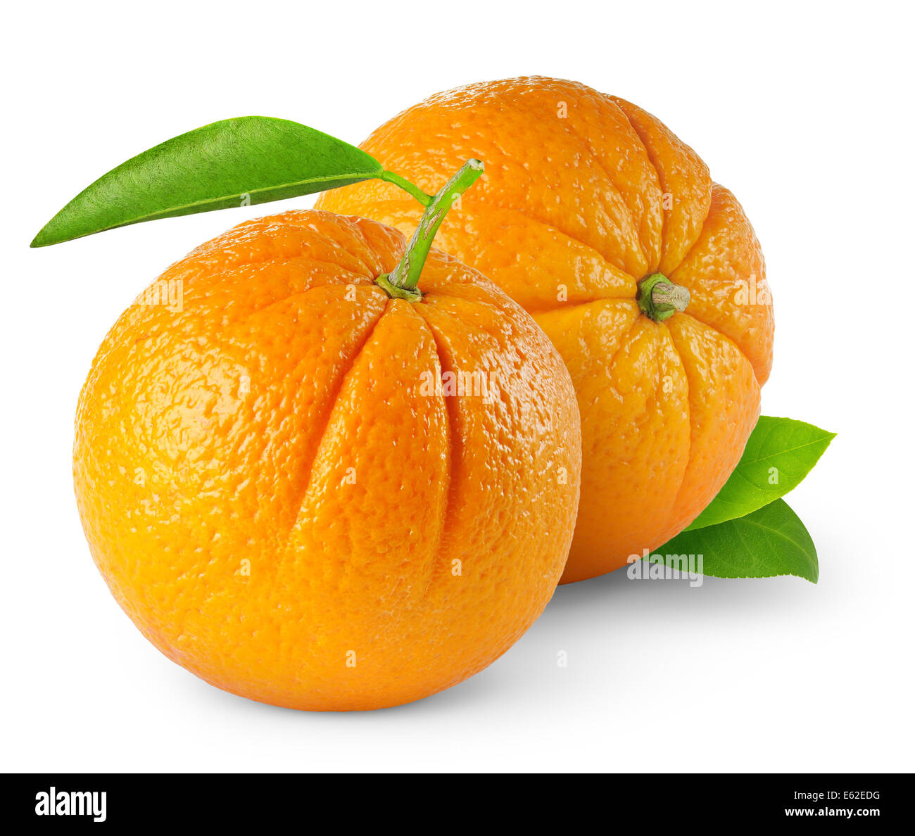 Two oranges on white background - Stock Image