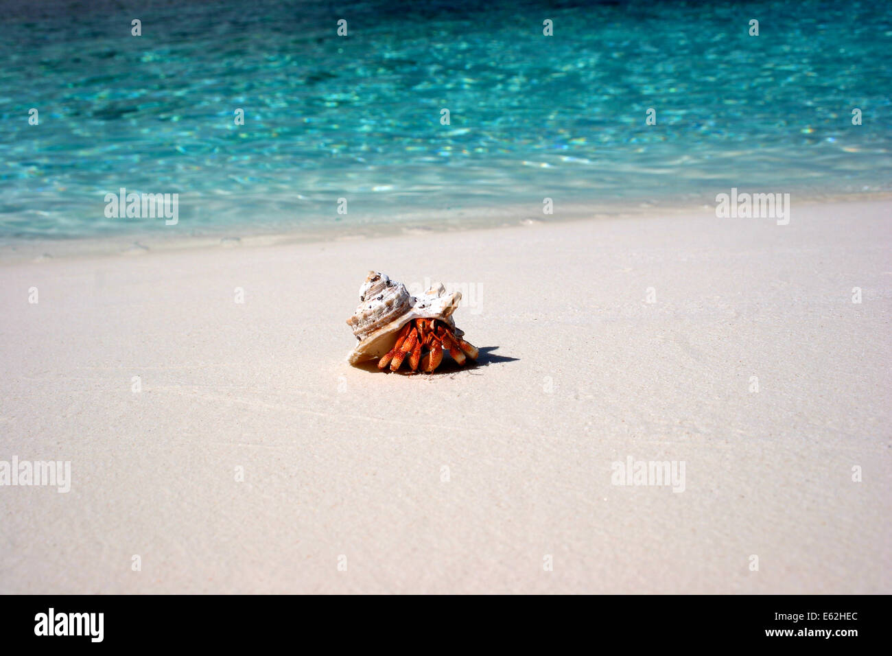 Hermit Crab on Prison Island, Cocos Keeling Islands - Stock Image