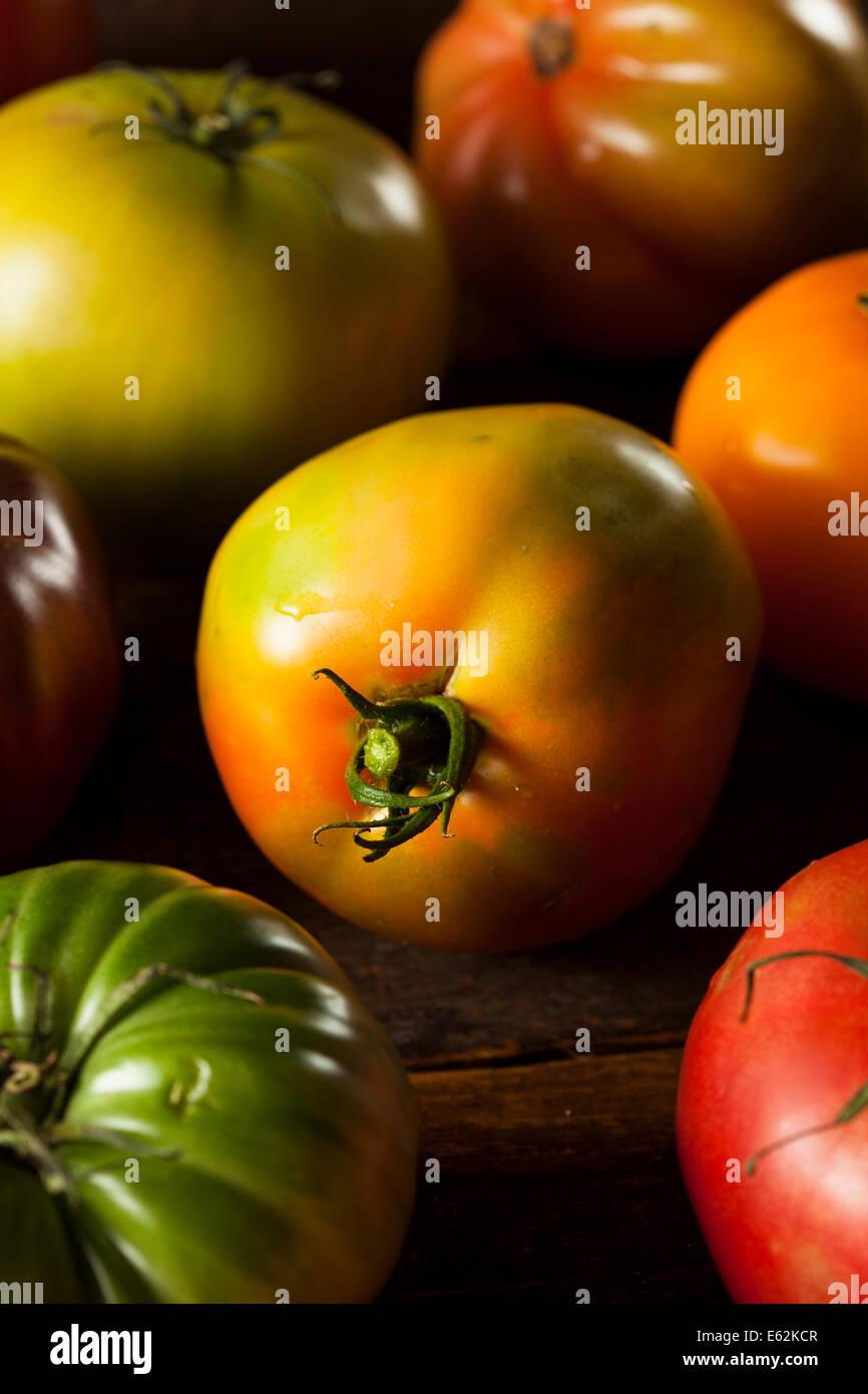 Colorful Organic Heirloom Tomatoes Fresh from the Garden - Stock Image