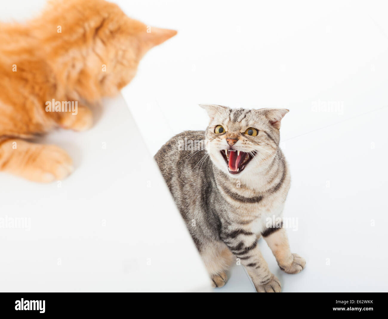 white fang conflict