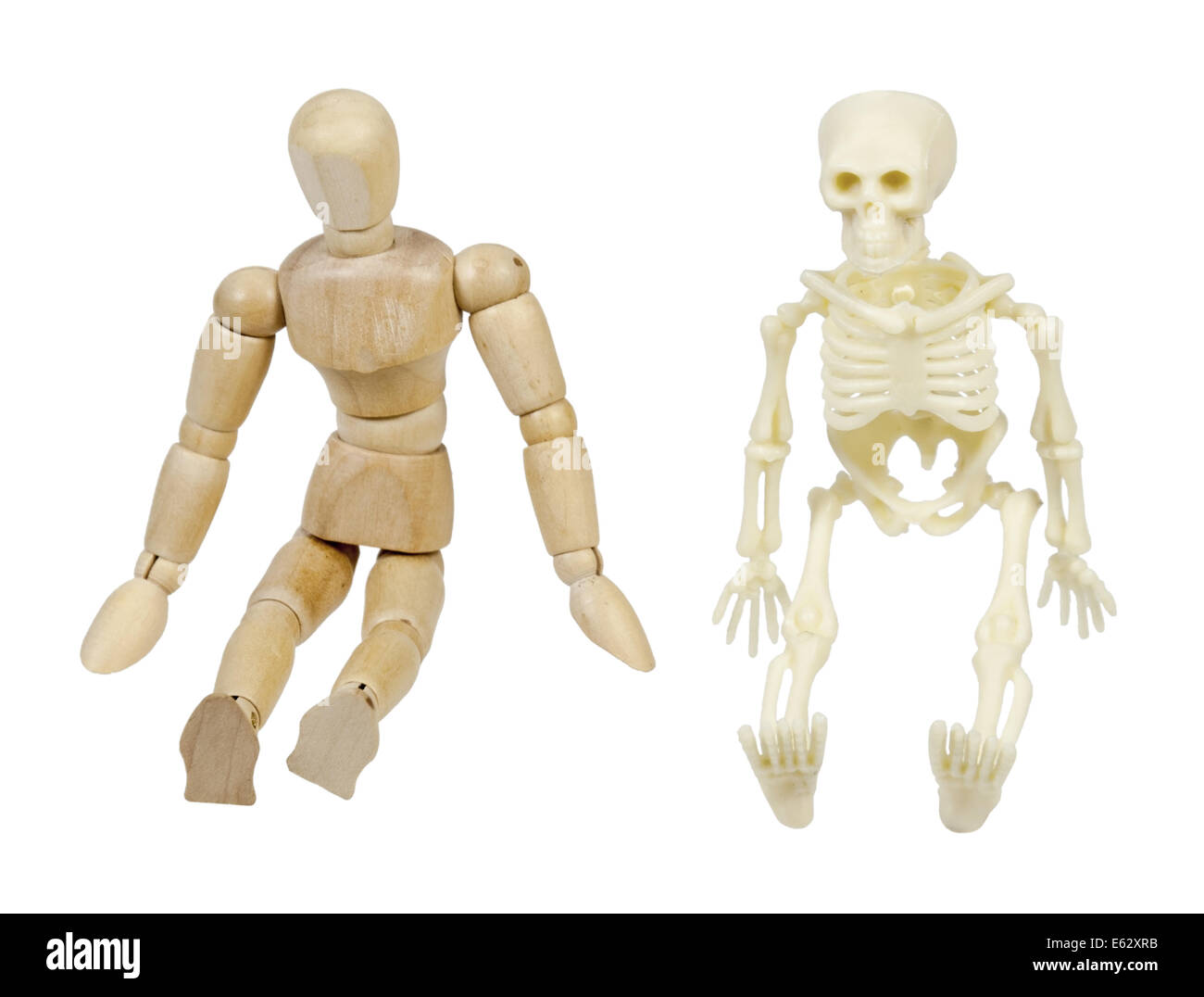Wooden model representing a person and a skeleton representing internal bone structure - path included - Stock Image