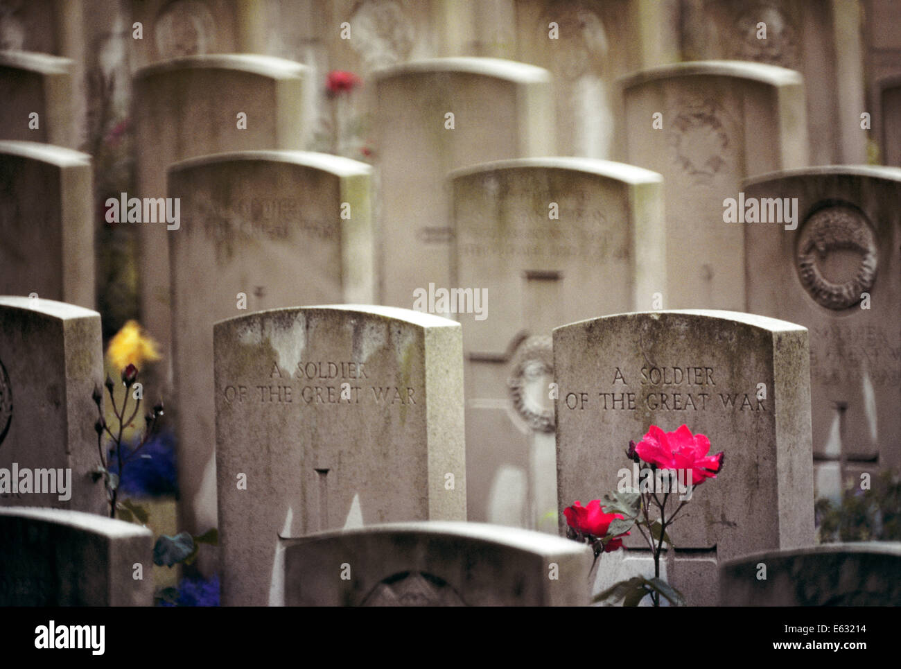 SOLDIERS GRAVES FROM WORLD WAR ONE A FLANDERS FIELD WITH RED ROSE - Stock Image