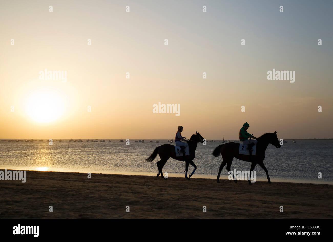 Riders riding towards the starting gate, horse race at the beach of Sanlúcar de Barrameda at the Guadalquivir - Stock Image
